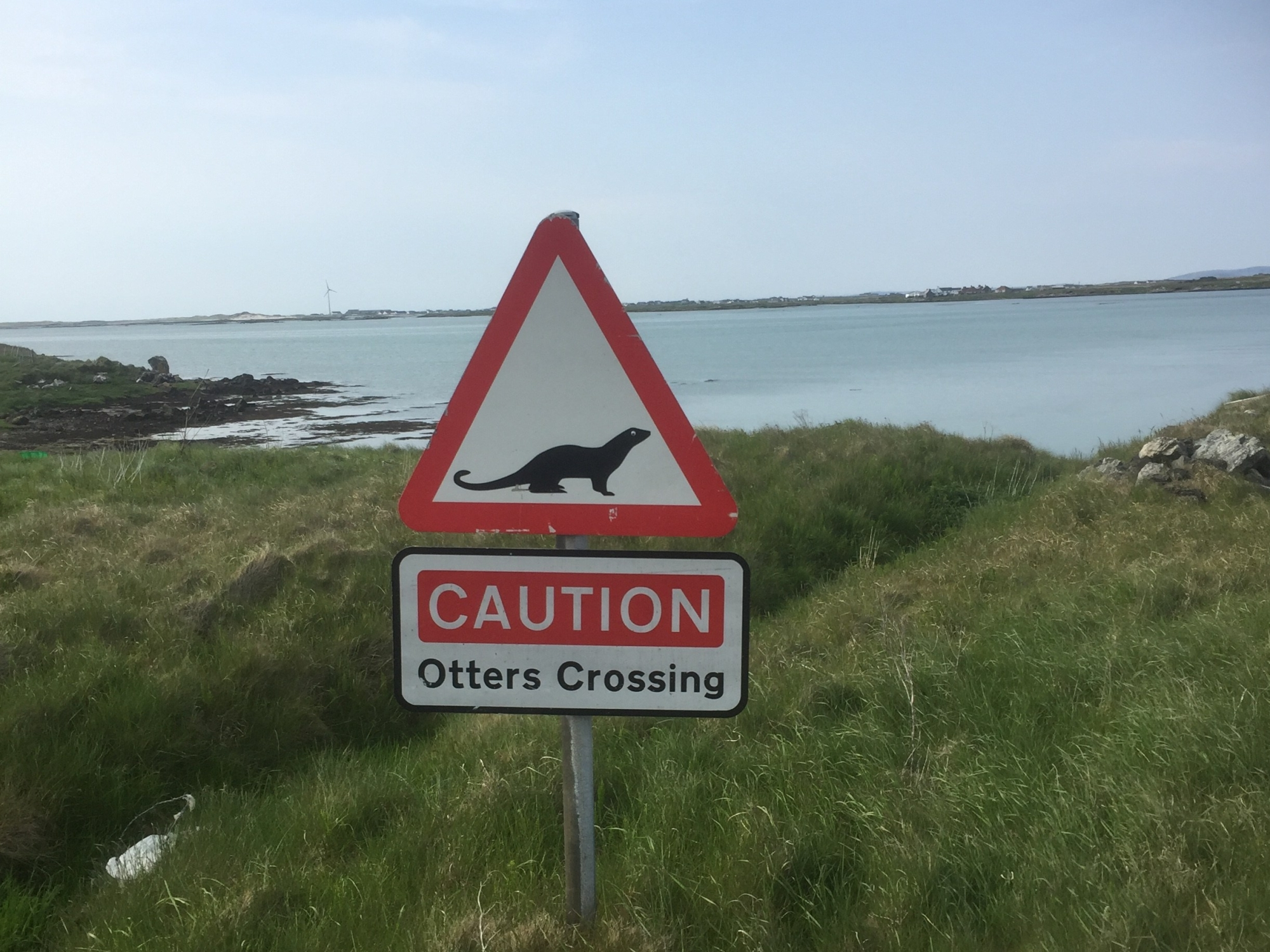 Otters crossing