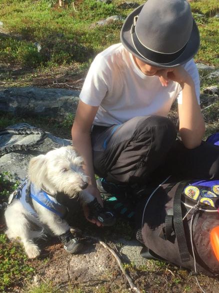 Cute little doggie hiking boots